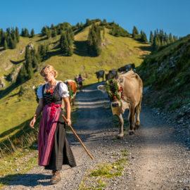 Alpabtrieb Alpen Latons